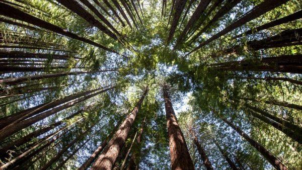 Plantar árvores pode salvar o mundo
