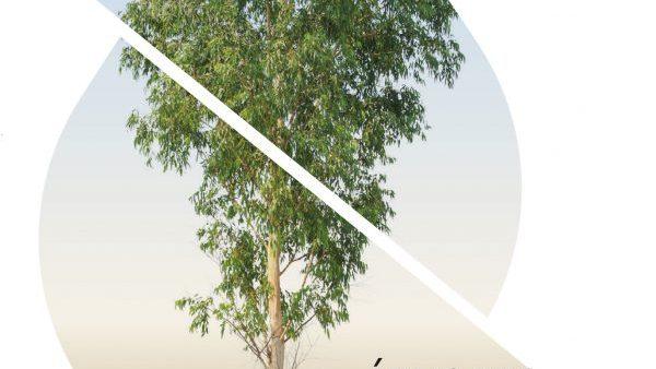 Árvores plantadas e recursos hídricos