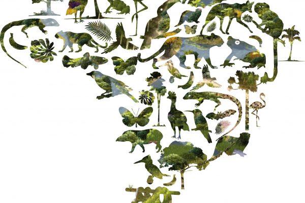 Árvores plantadas e biodiversidade