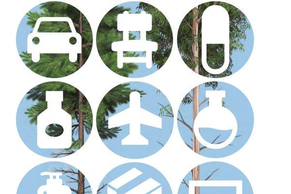 As árvores plantadas e seus múltiplos usos