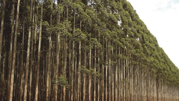 A indústria de base florestal é essencial ao enfrentamento da COVID19