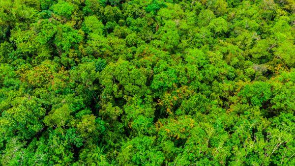 Amazônia: Você precisa saber