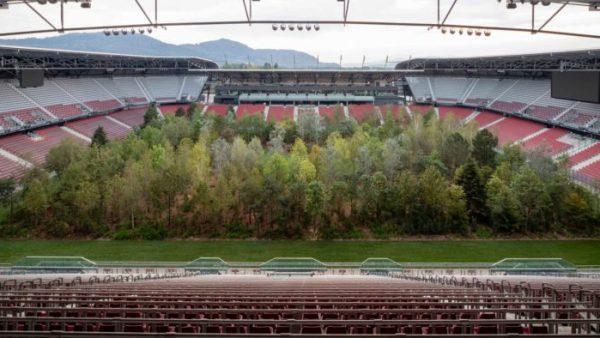 Árvores plantadas em campo de futebol