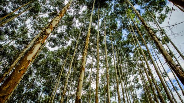 A mídia impressa ajuda a proteger as florestas