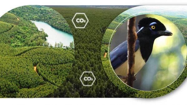Ibá apresenta: um setor que está do lado certo da equação na luta contra as mudanças climáticas